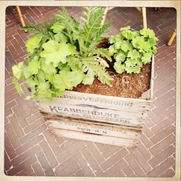 grüne Kiste