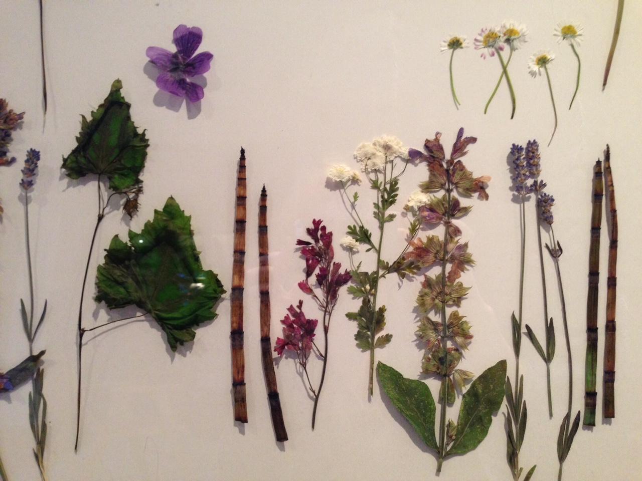 gepresste Blumen